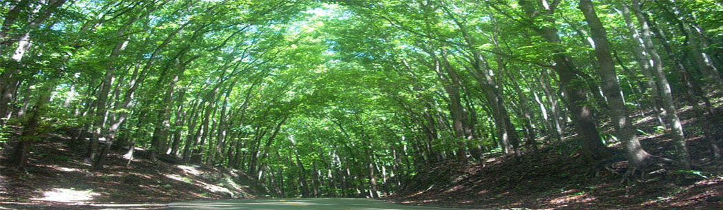 Man-Made Forest - Thousands of mahogany trees planted by locals are found in Bilar's Man-Made Forest. You can relax and feel the breeze or take pictures among the towering trees.